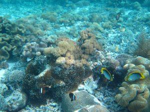 The Coral Garden, Menjangan Island