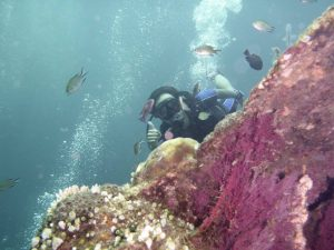 Corals by The USAT Liberty wreck